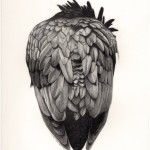 Raven.web