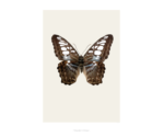 Butterfly on print