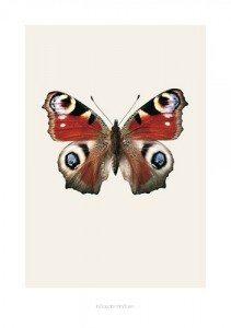 poster-plakat-billede-sommerfugl-gamle-bilogi-plakater-bilologi-natur-indretning-boligindretning-design2