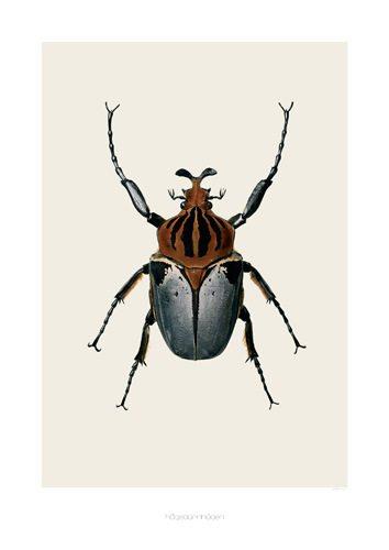 poster-plakat-billede-bille-gamle-biologiplakater-natur-dekoration-indretning-boligcious2