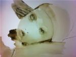 Kunst af Siri Gindesgaard