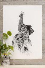 Peacock – Dagens Poster