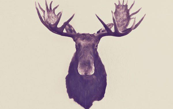 elg-kronhjrot-trofae-jagthytte-indretning-bolig-plakat-print-grafisk-illustration-graphic-paa-vaeggen