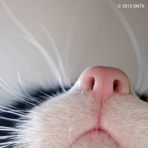 Cat's Nose – Dagens Poster