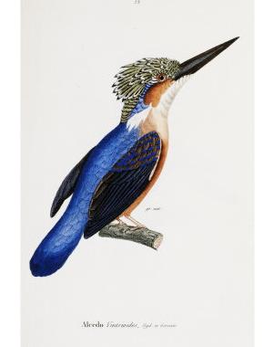 poster-malaga-plakat-print-kunst-kolibri
