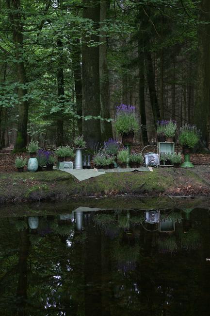 have-garden-lavendar-lavendel-flower-blomst-terrasse-sommer-spring-summer