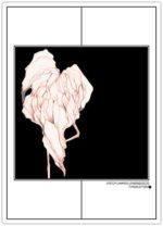 Disco Flamingo – Dagens Poster
