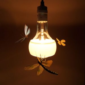johnny-b-butterfly-light-w90-h65-crop_
