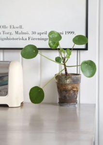 boligcious-home-decor-indretning-planter-rustikke-potter