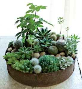 Green Living – indret med planter