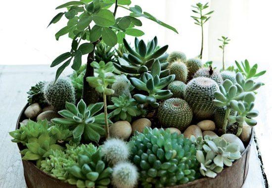 boligcious-home-decor-indretning-planter-potter-sammenplantning-sukkulenter