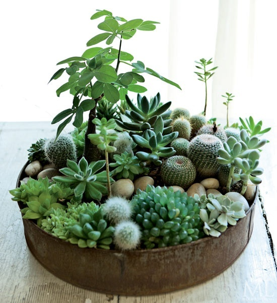 boligcious-home-decor-indretning-planter-potter-sammenplantning-sukkulenter