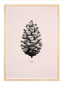 Pine Cone- Dagens Poster