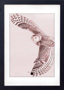 Powder Owl – Dagens Poster