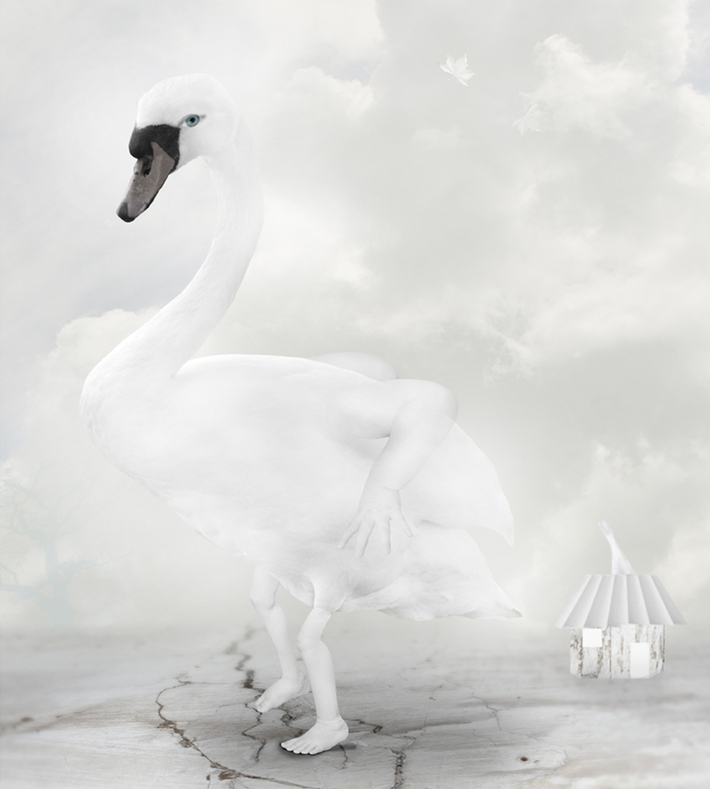 petmonkey-kunst-print-plakat-art-swan