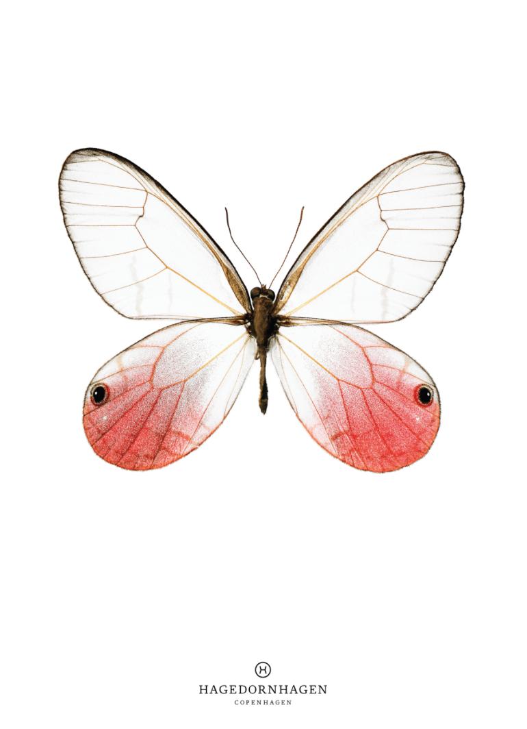 butterfly-poster-print-plakat-hagedornhagen-art-artprint