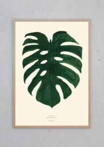 Monstera – Dagens Poster