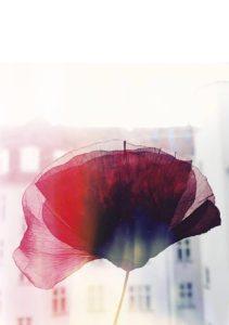 Poppy on Print – Dagens Posterhttp://idalaerke.com