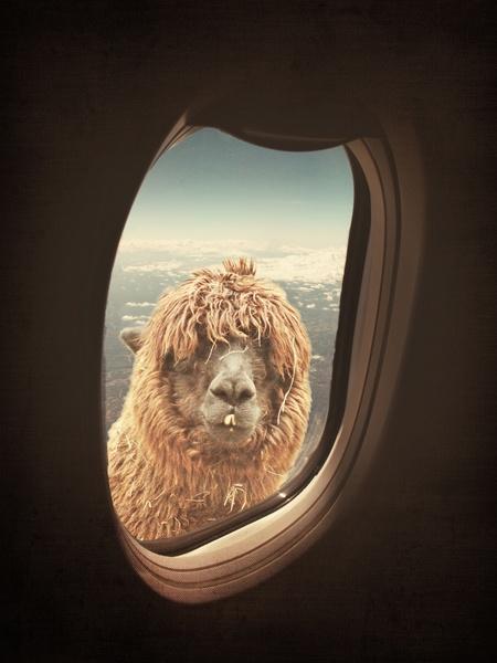 art-artprint-kunst-kamel-camel