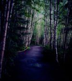 RebelPick Monday: Walks In Birch Park
