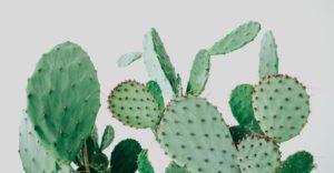 TREND: Kaktus København
