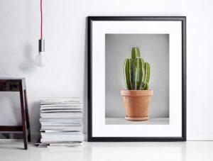 kaktus-2-5