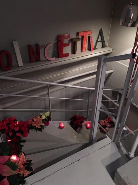 I dag er det Poinsettia dag!