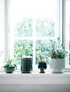 plants-window-indretning-decor-malenemariemoller
