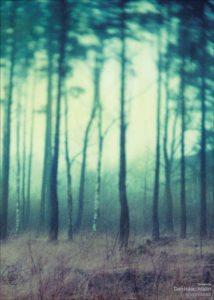 fairyland-_lowres_1024x1024
