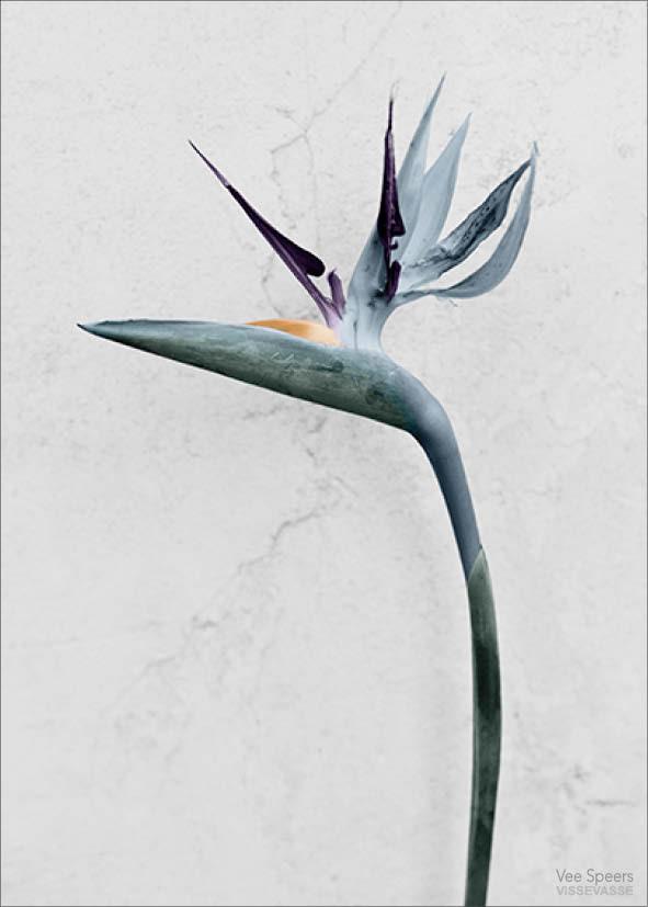 botanica-strelitzia_reginae-lowres_17516db6-a9ec-402c-b19a-d8d9358cc767_1024x1024