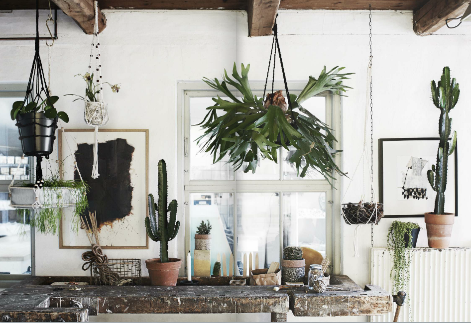 Indretning med planter