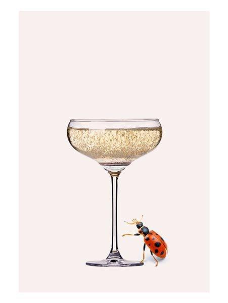 Champagne Ladybug