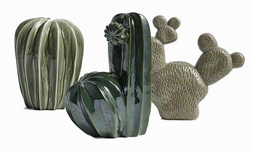 HAY Cacti family
