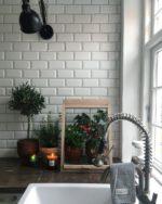 Urban gardening: Der er gang i mit lille væksthus