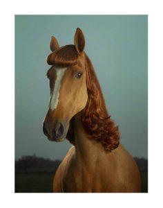 Hvis jeg var en hest…