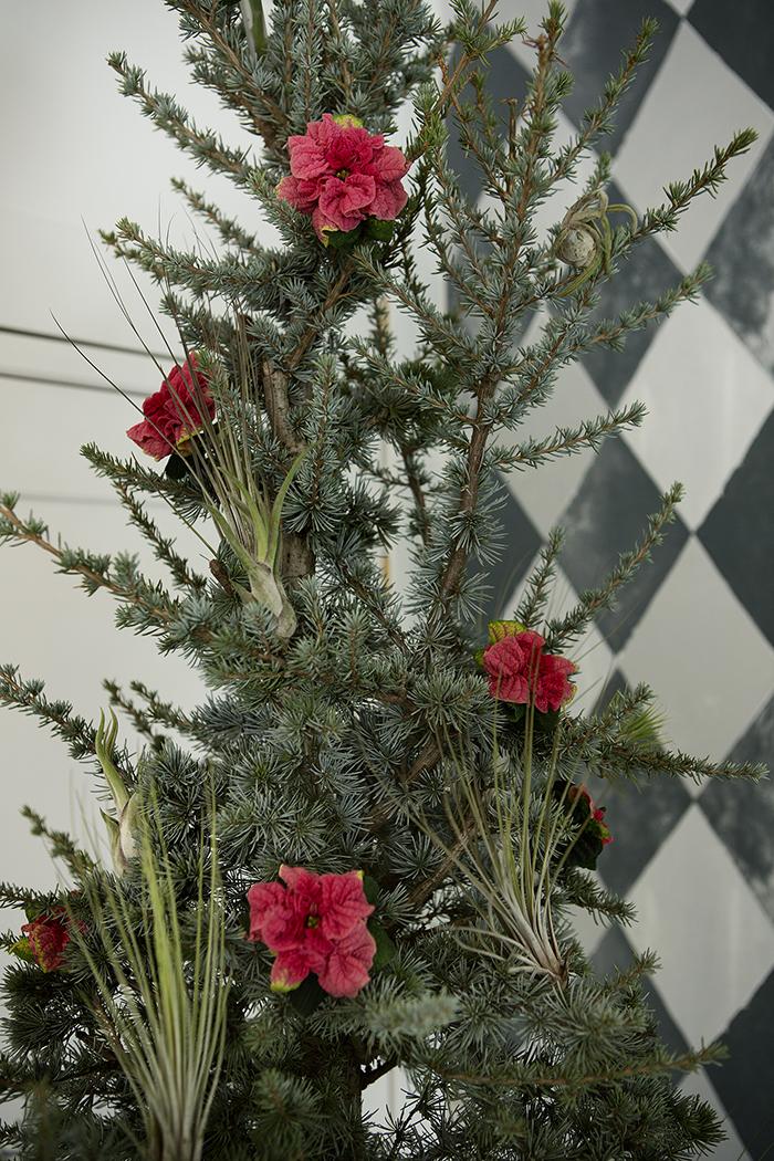Julestjerner - Floradania