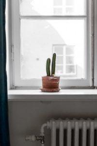på billedet ses en kaktus i en vinduekarm. Udtrykket er helt stilrent og enkelt, nærmest poetisk