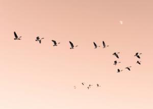 'Morning Flight' fotokunst af Maria Fynsk Norup