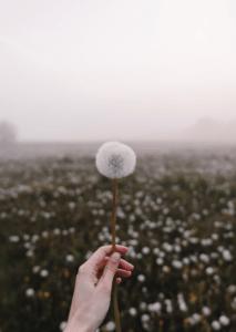 'Wishful Tinking' af Maria Fynsk Norup
