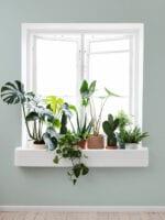 Indret med planter